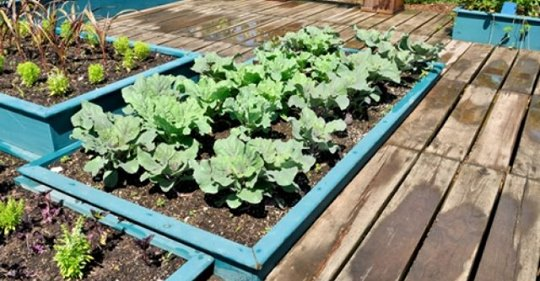 Как спасти сад и огород от потопа?