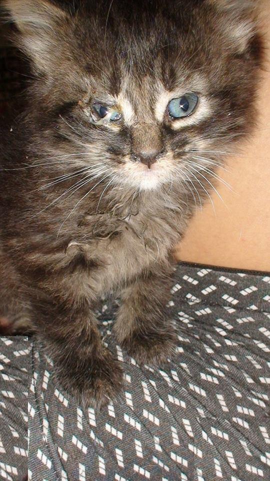 Котёнок испуганно выглядывал из-под внедорожника! Кроха был болен, но впереди его ждал приятный сюрприз
