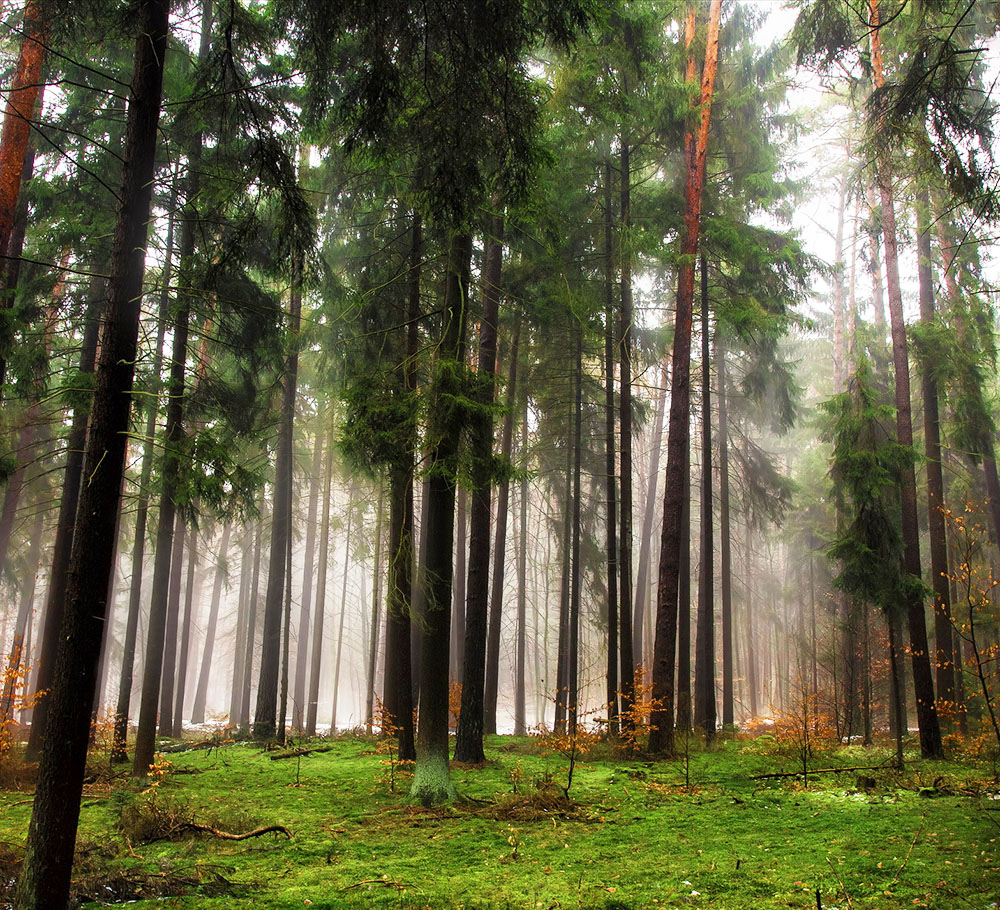 Целебные свойства лесного воздуха…