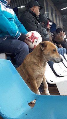 собака на стадионе