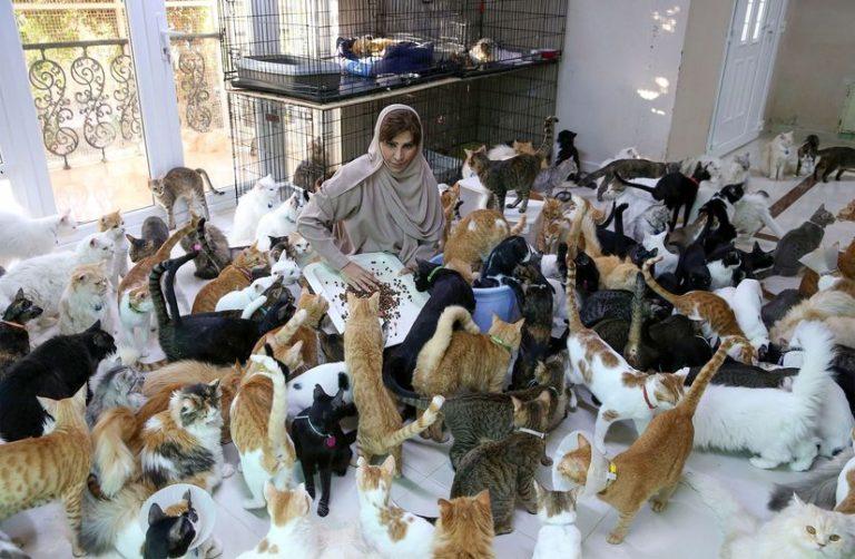 Рецепт женского счастья: 12 собак, 480 кошек и большие суммы денег на уход за ними