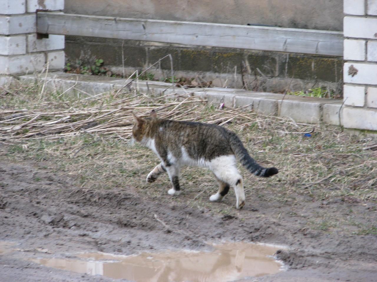 Братья наши меньшие: какого цвета кошки способные к верности и любви?