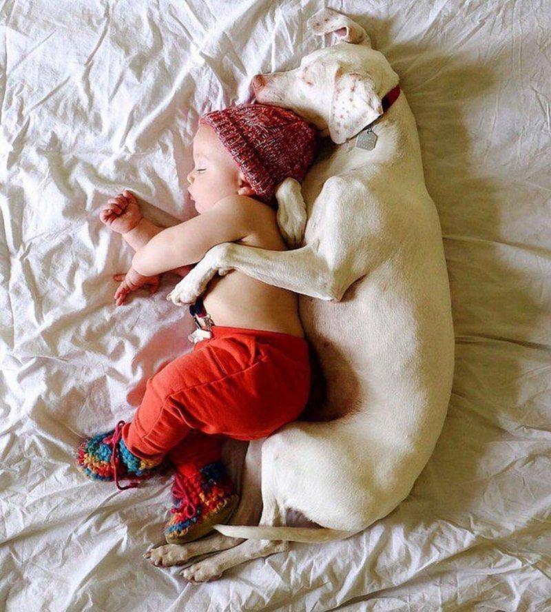 15 фото, после которых вам захочется завести собаку.