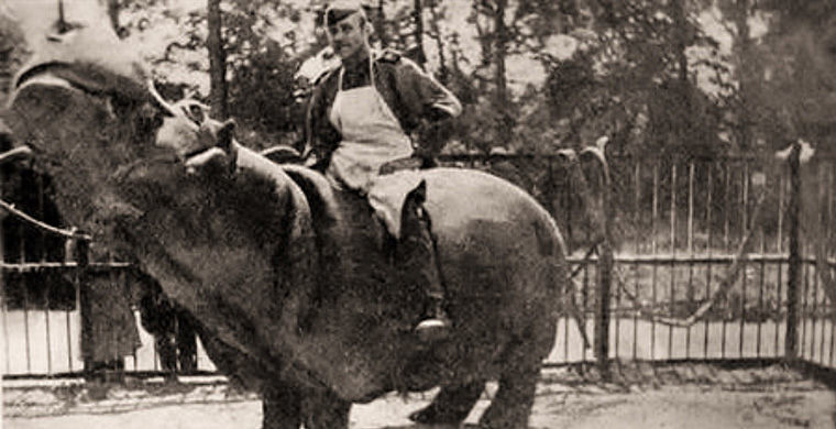 Смех сквозь слёзы: история спасения бегемота Ганса