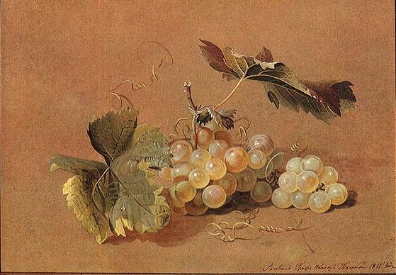 Ф.П.Толстой. Ветка винограда. Натюрморт. 1817