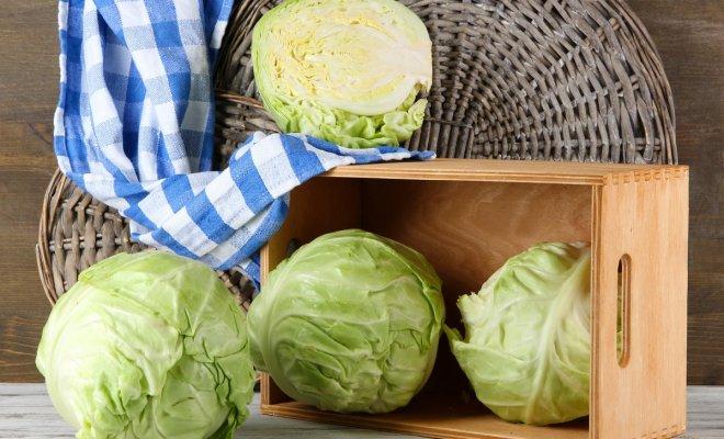 Как сохранить капусту в свеж…
