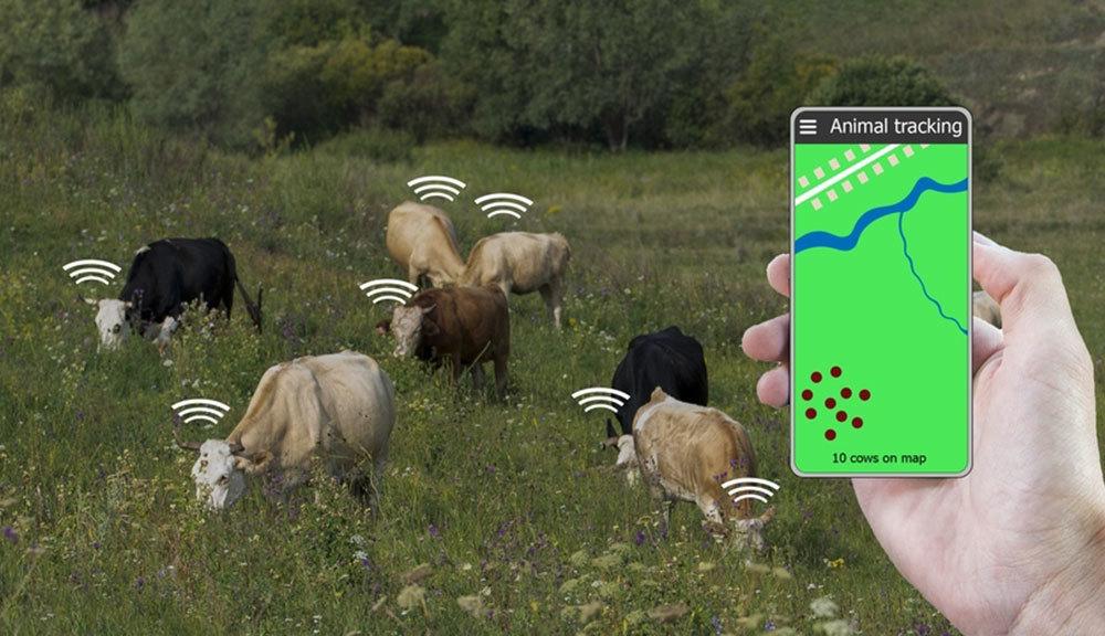 МТС тестирует умные датчики для крупного рогатого скота МТС,общество,россияне,сотовые операторы,технологии
