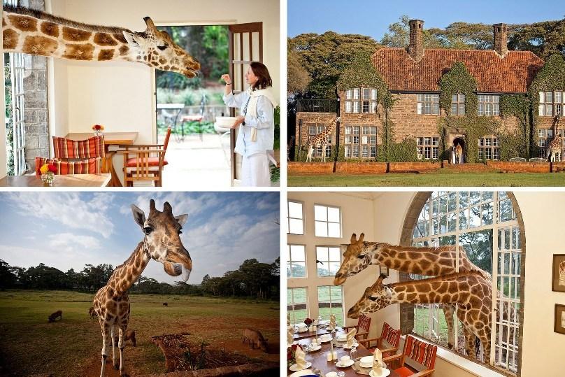 За завтраком с жирафами в Кении
