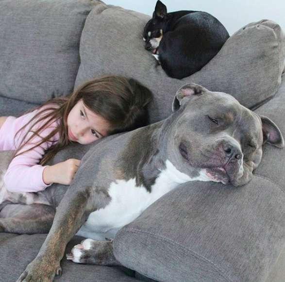 Семья приютила питбуля, и с тех пор он не отходит от дочки, охраняя её сон не всё так грустно