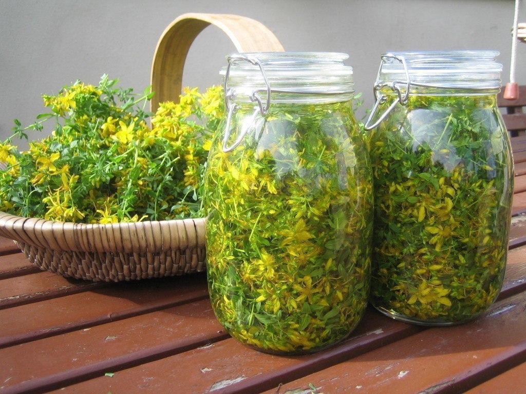 Вылечить печень травами. 5 проверенных  рецептов