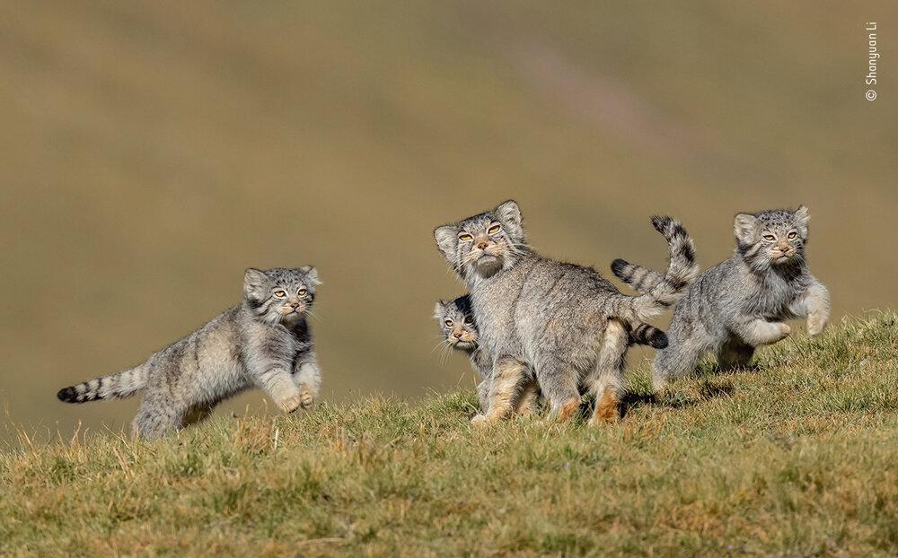 «Когда мама говорит, беги». Фото:  Шаньюань Ли.