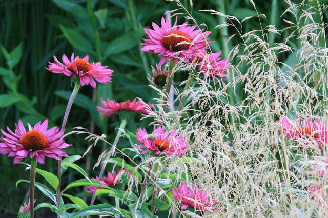 От сердца и почек. 10 неприхотливых лекарственных растений для вашего сада