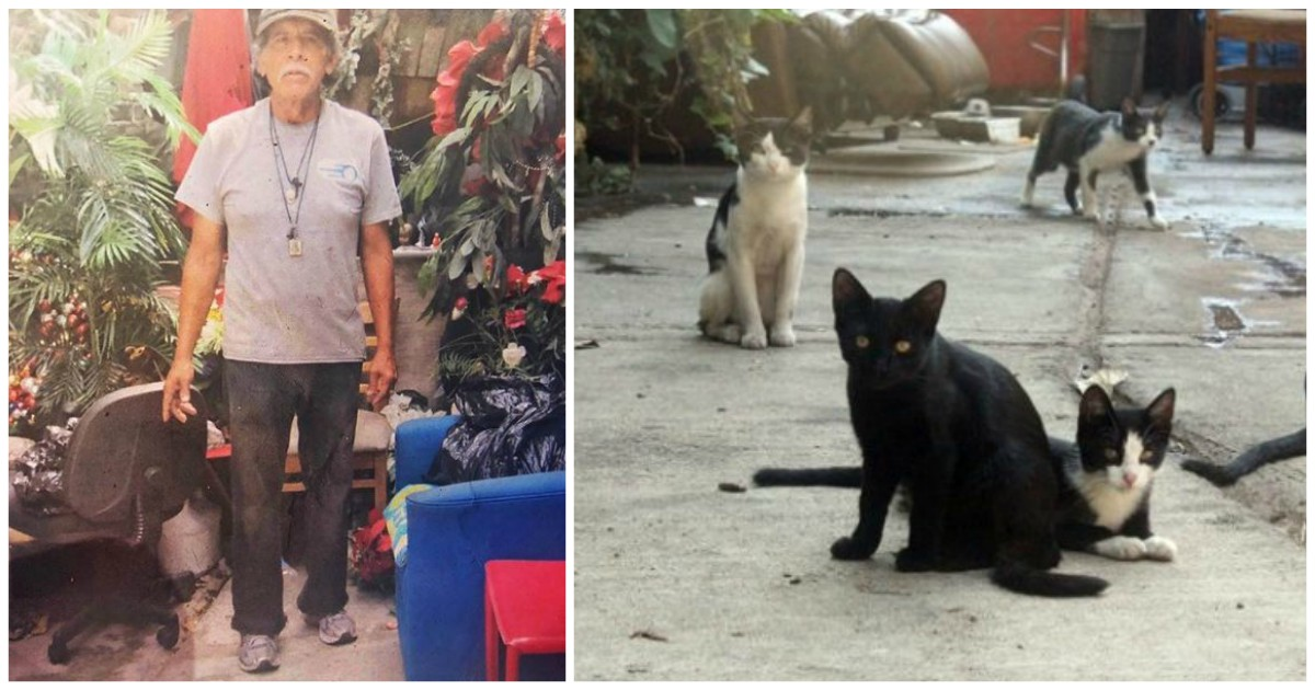 Бездомный создал аллею 40-ка кошек! Он ухаживал за ними, а когда ушёл – жители района сделали замечательную вещь!
