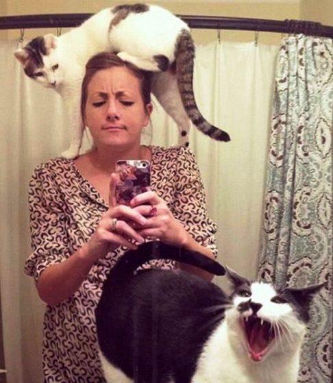 И это еще очень большой вопрос  — кто в доме хозяин? Если в этом доме есть котик!