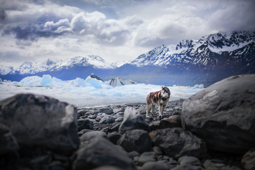 Душевные портреты собак, исследующих разнообразие и красоту нашего мира