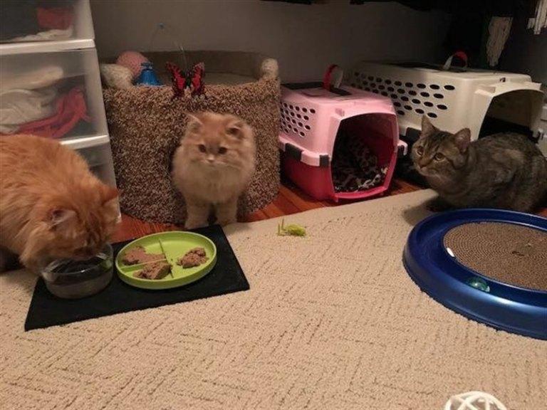 3 породистых кота были найдены у двери зоомагазина с запиской