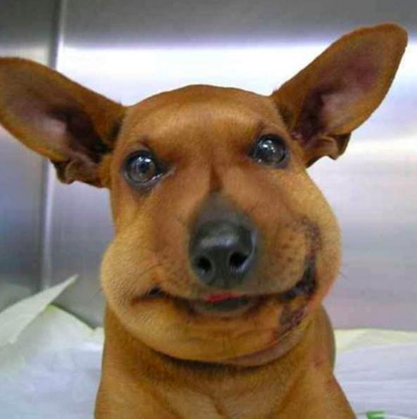 17 фотографий собак, которые съели пчелу