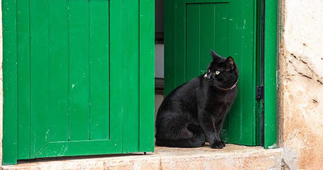 Что означает черная кошка у …