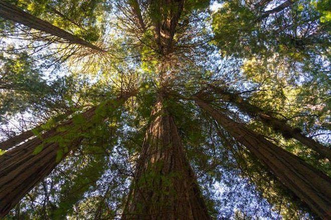 Высокие деревья