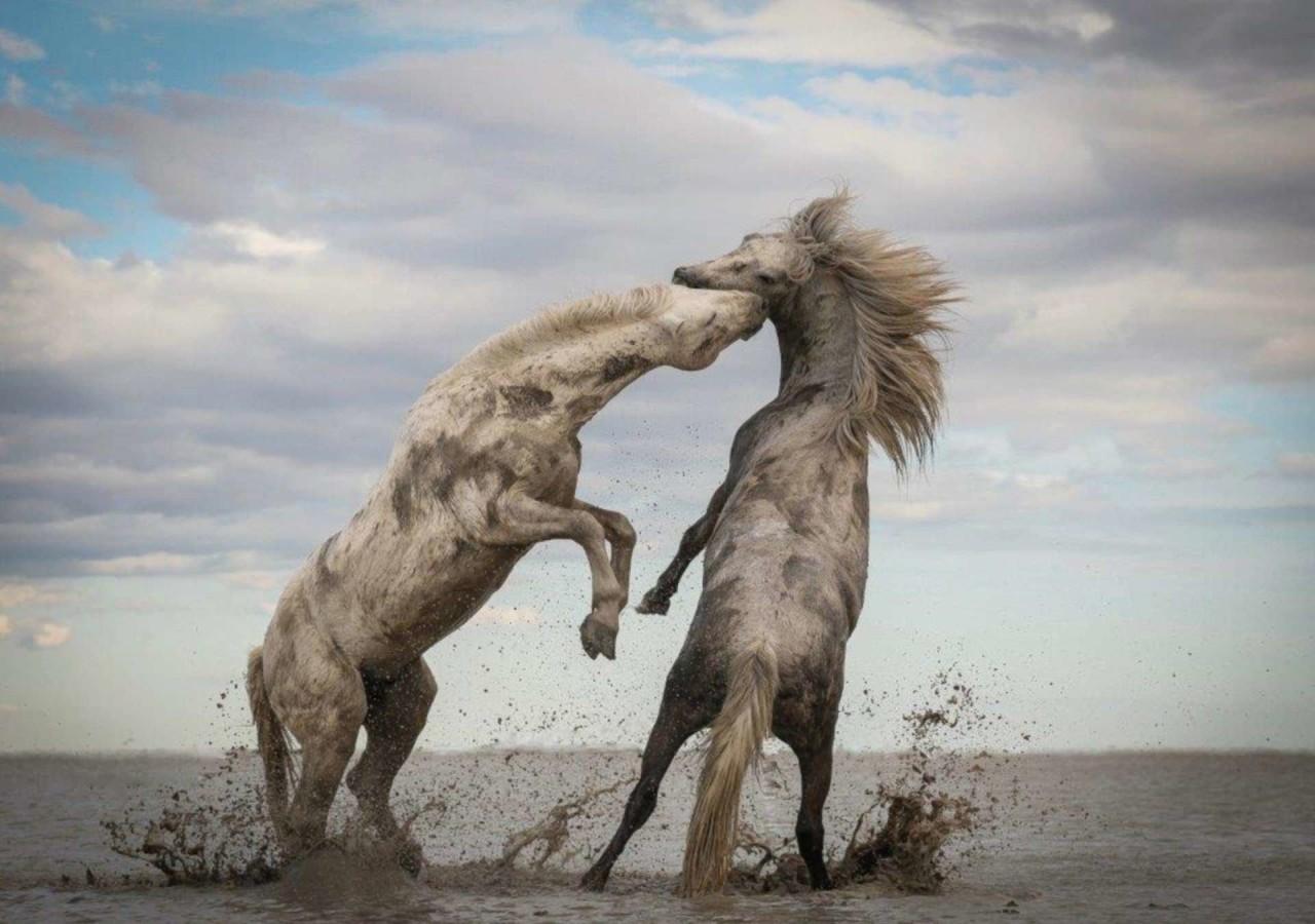 Победители фотоконкурса The Nature Conservancy