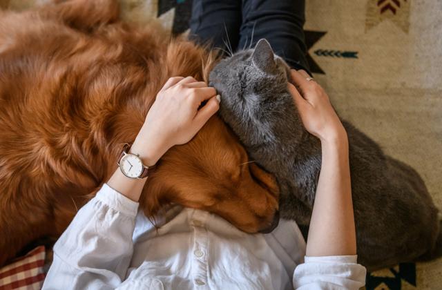 Как подружить собаку и кота