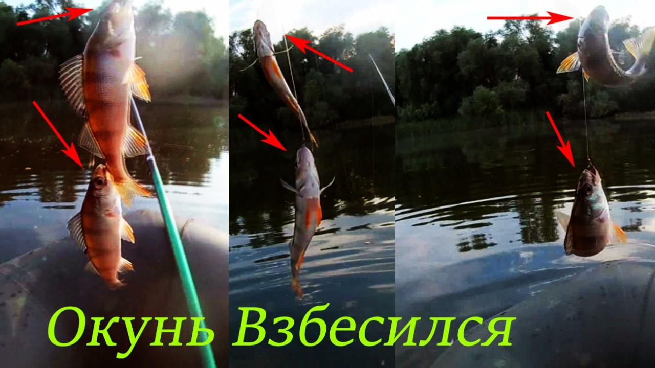 Рыбалка на удочку Окунь Взбесился много окуня и карася.Рыбалка на видио