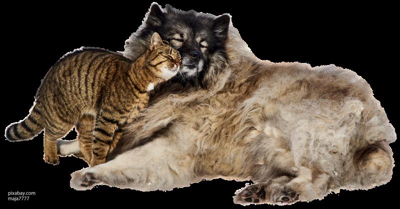 Саратовские волонтеры пытаются спасти от голода животных из приюта
