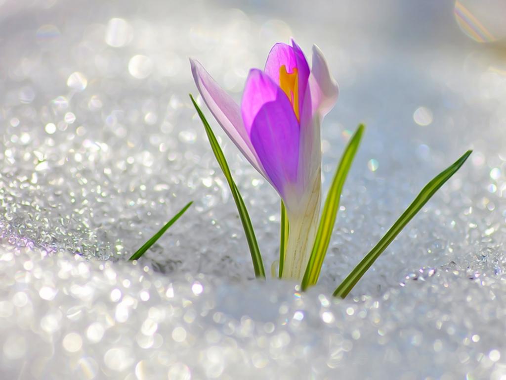 дыхание весны картинки нереально