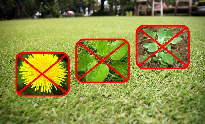 Как избавиться от сорняков на газоне – самые эффективные методы борьбы