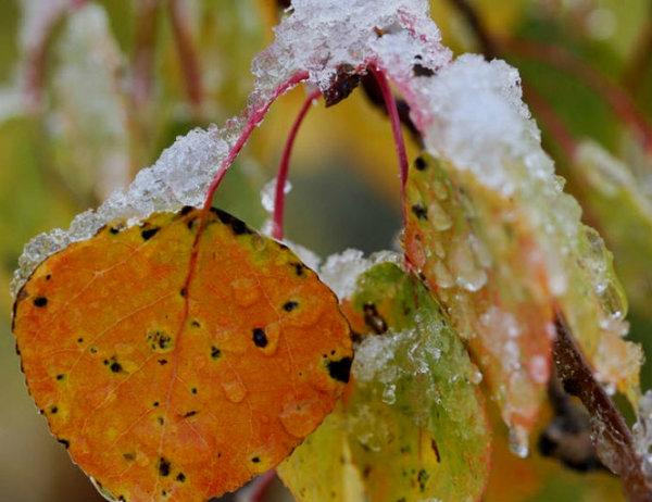 Почему не опадают листья
