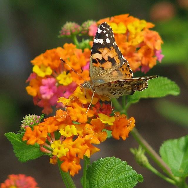 5 лучших почвопокровных растений для ландшафтного дизайна