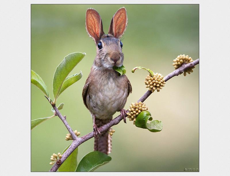 Североамериканский кролик-зануда животные, прикол, юмор