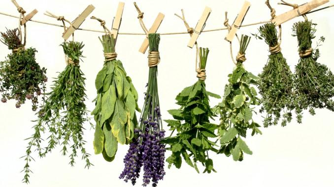 Лекарственные растения при заболеваниях кожи