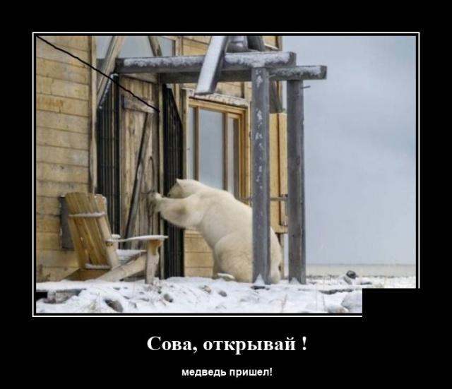 лесу демотиваторы хорошего качества россии