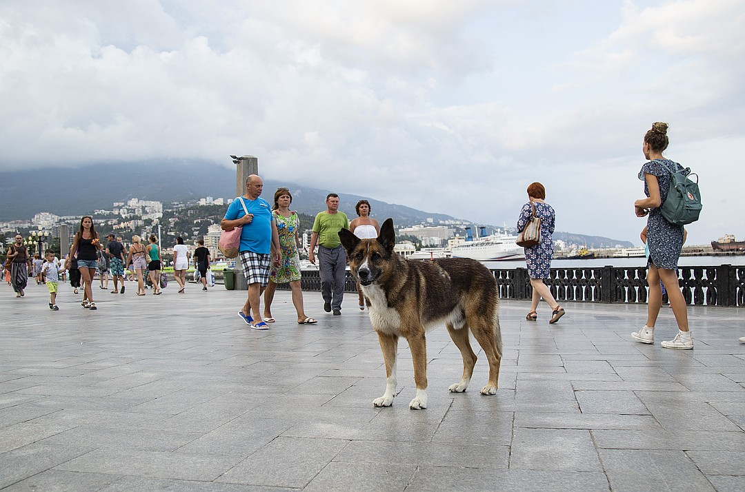 Пес ждет хозяина на набережной. Фото: Наталья Гоцанюк