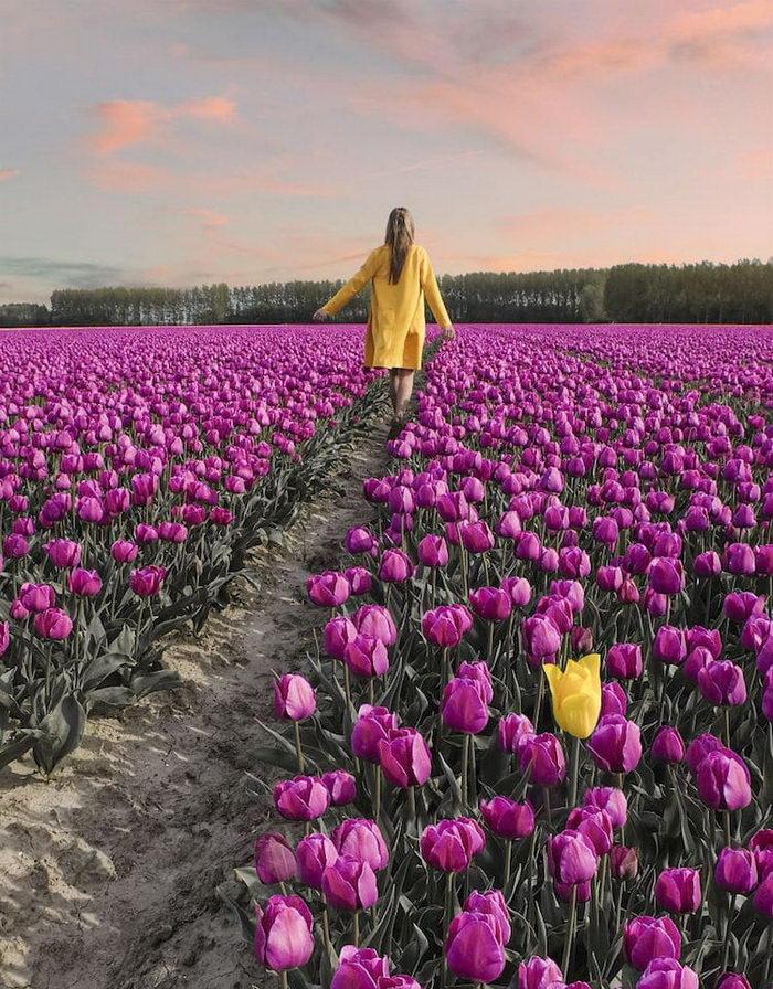 Цветение тюльпанов в Нидерландах. Удивительное действо, которое должен увидеть каждый!