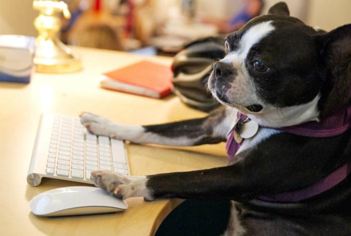 Пес самоотверженно проектируют логическую структуру веб-страниц.