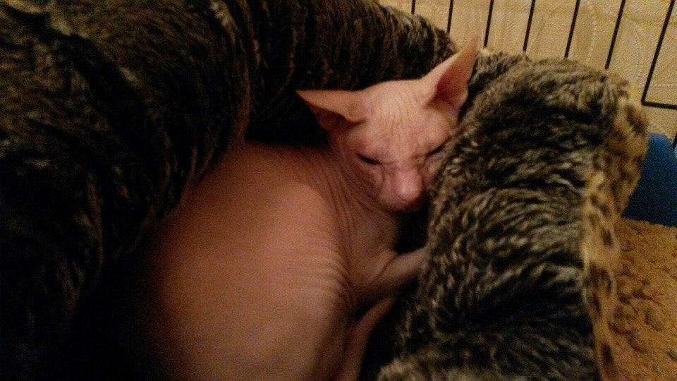 «В один момент у неё из глаз покатились слезы!» Мужчина принёс напуганную кошку к ветеринарам и потребовал усыпить