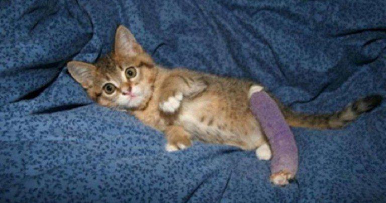 Котёнок с поломанной лапкой спас человека