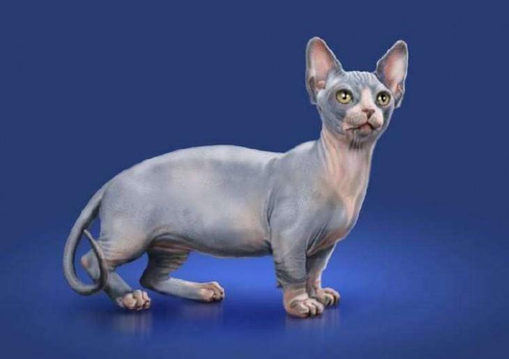Редкие и очень красивые породы кошек