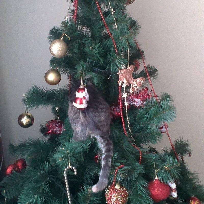 """Эксклюзивная ёлочная игрушка от фирмы """"Ёшкин кот"""" елка, игрушки, кот, новый год, разбой"""