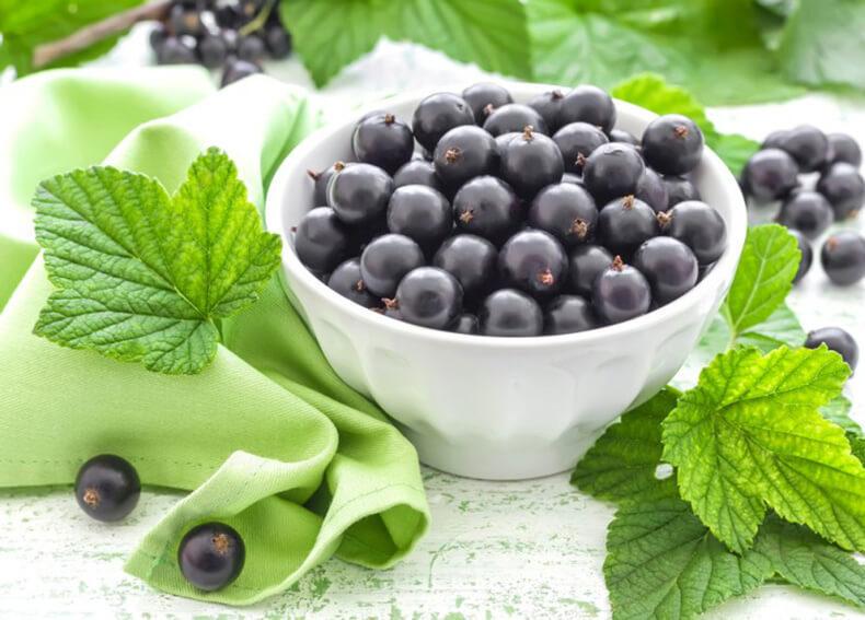 Секрет сладкой смородины: делаем правильное удобрение