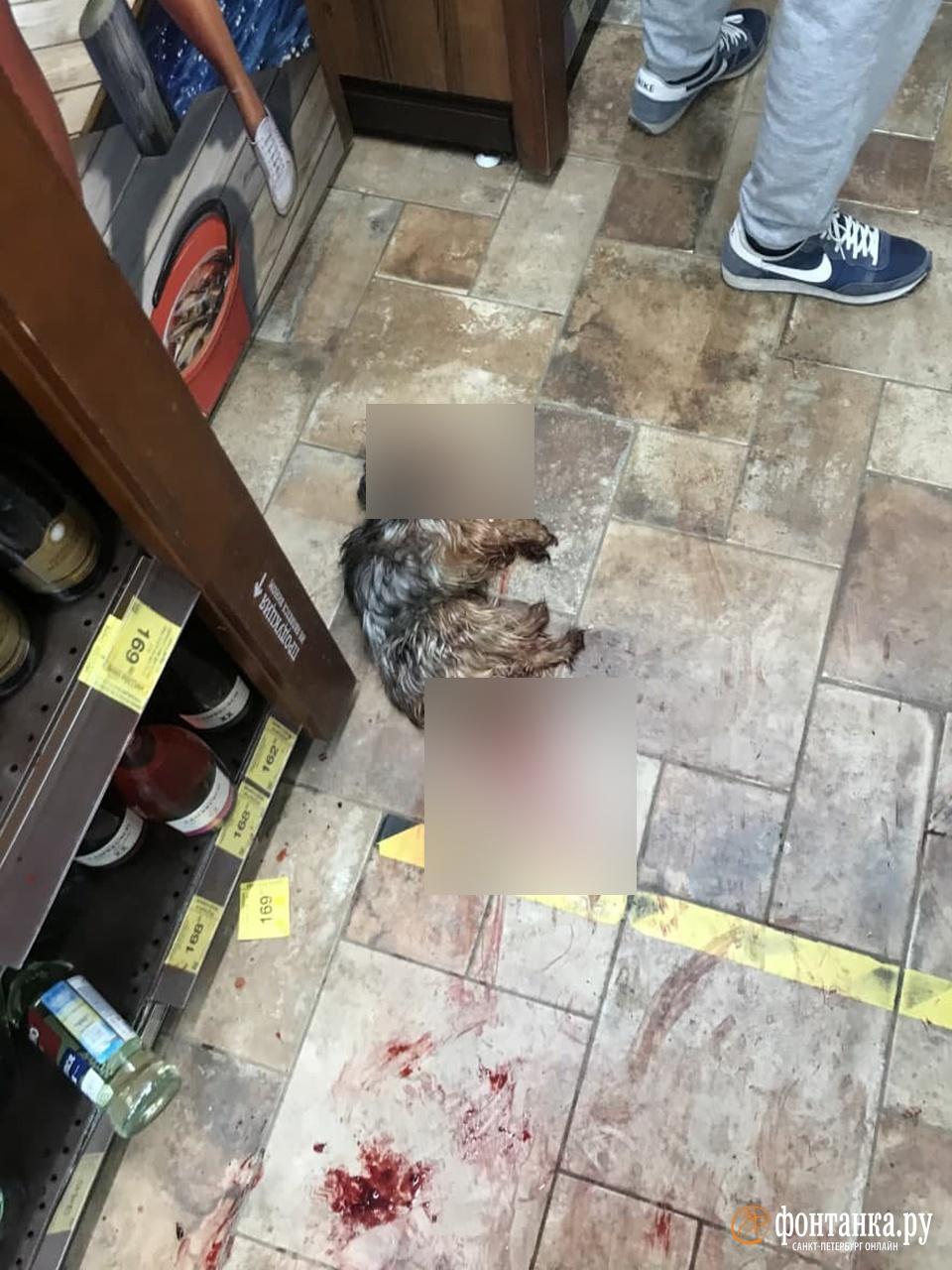 «Напала без провокаций и молниеносно». В Петербурге бойцовская собака разделалась с маленьким Гошей на глазах посетителей магазина