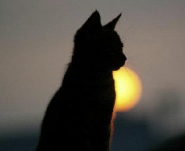 Картинки по запроÑу одинокие кошки