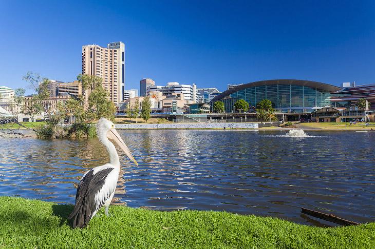 Аделаида (Австралия)
