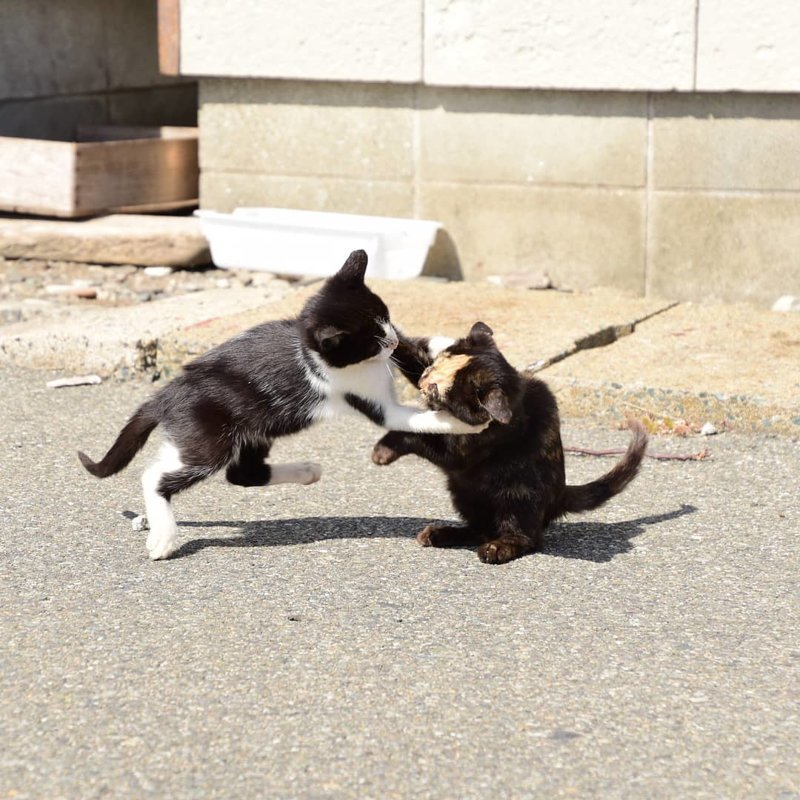 Иногда мы устраиваем разборки и между собой кот, коты, опасный кот, прикол, суровый