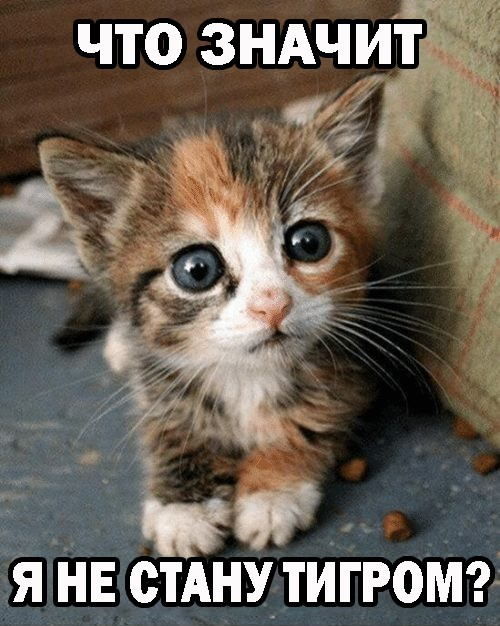 Веселые приколы с котами и котоматрицы для хорошего настроения картинки с надписями,приколы,смешные комментарии,шикарные фотографии,юмор