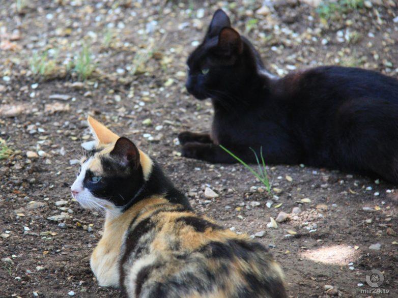 Об эволюционных корнях кошачьего высокомерия