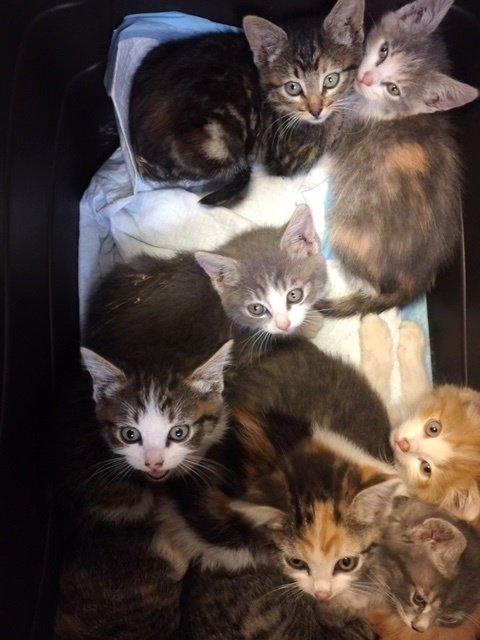 С крыши спасли большую семью кошек
