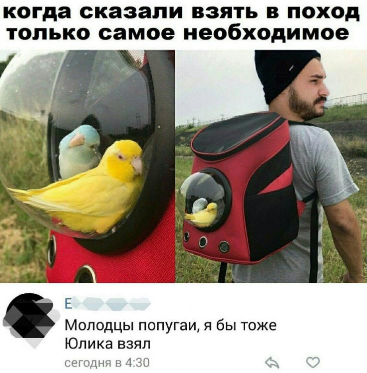 Аттракцион для попугайчиков